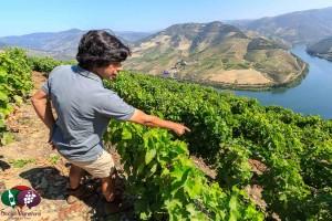 Douro Valley – Unique Wine Region of Portugal