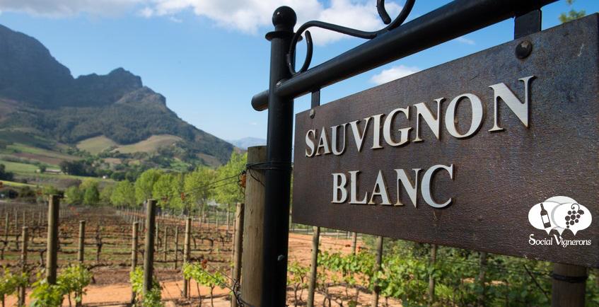 Infographics & Guide to Sauvignon Blanc Wine Grape Variety