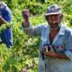 Xinomavro Greek Wine – Must-Knows in 400 Words